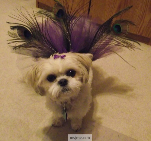 Peacock Feather Dog Tutu Just My Experience