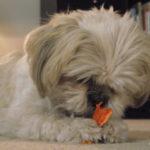 Sweet Potato Dog Chew